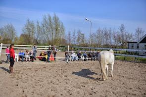 Individuele sessie met paard